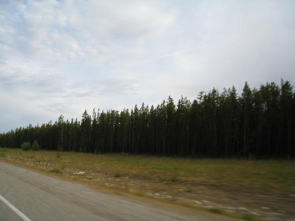 Yukon to Whitehorse to Liard Hotsprings