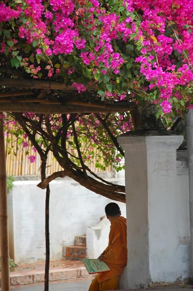Monk Reading  - Luang Prabang, Laos