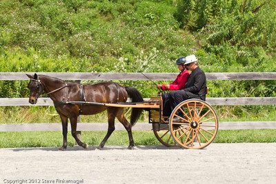 Bradford County Roundup Pleasure Pony Driving