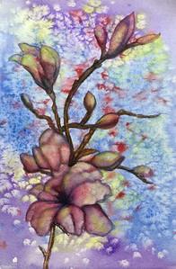 Spring Magnolia Blossoms