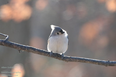 2018-01-01 Winter Critters