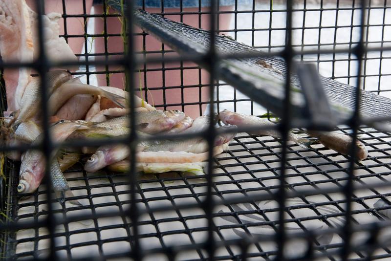 200905_Trinidad-42.jpg