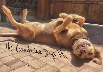 The dogs Life in Ecuador