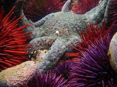 Invertebrates - Aquatic