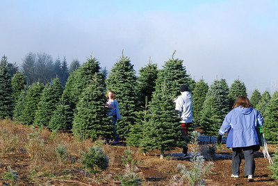 2009 Christmas Tree Hunt