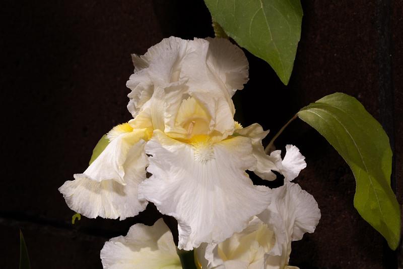 white_flower-.jpg