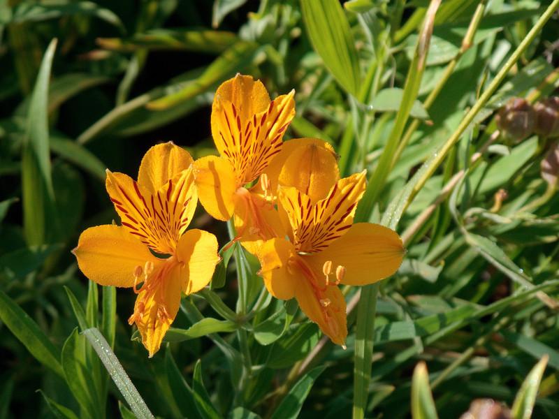 Ruta de Los Siete Flowers