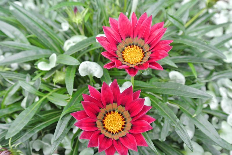 2013_Sing_Gardens_By_Bay_Jan  0005.JPG