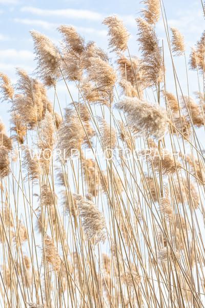 202011202020_11_20 Tall Pampas Grass126--1.jpg