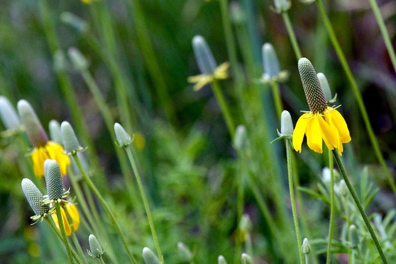 clip-015-flower-wdsm-01jun12-6512.jpg