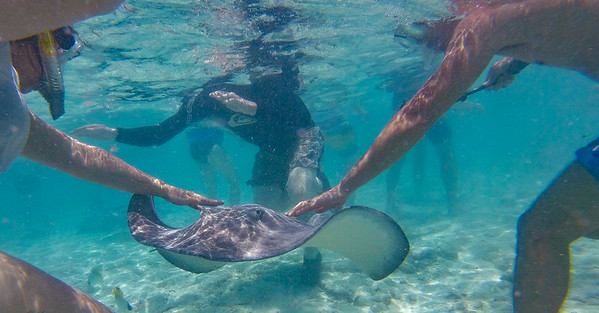 9_Bora Bora Swimming with sharks/rays shore ex