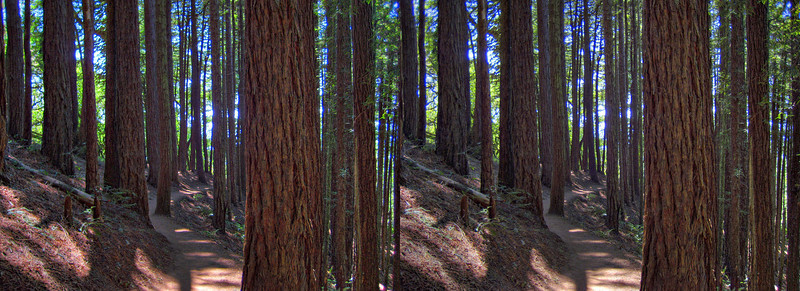 Dipsea Trail Hike - in 3D