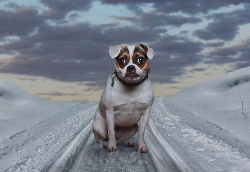 russel-snow5.jpg