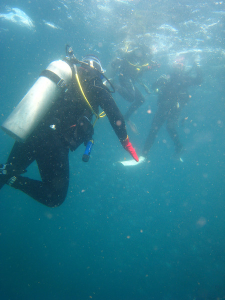 Diving in the Galapagos (205 of 392)