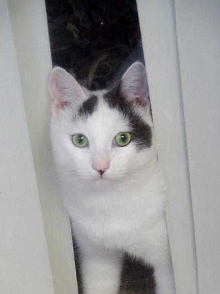 Rescue Cat 2015