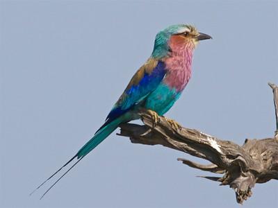 Day 13, Oct 30. Birding Kruger National Park