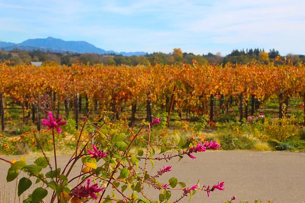 Quivira Vineyards and Winery