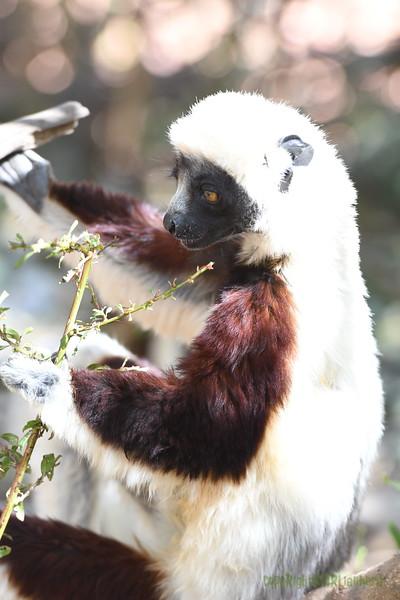 Madagascar 2017 (40)