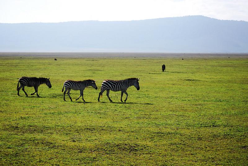 Ngorongoro (44).JPG