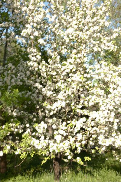 Dag_046_2012-maj-27_6731a.jpg