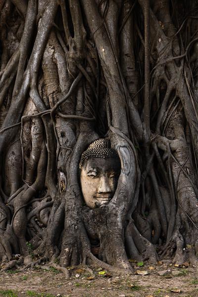 Wat Phra Mahatat - Buddha Head