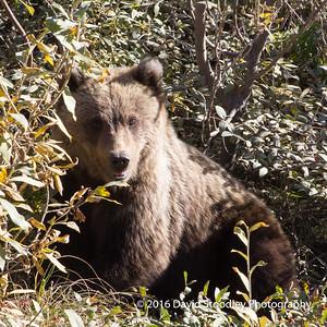 Alaska Creatures