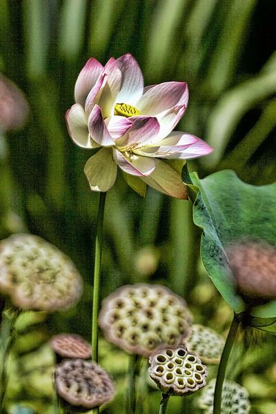 The Flower 2.jpg