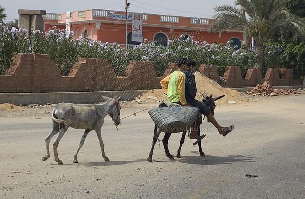 20100801 1036 Road to Saqqara _MG_2343 A