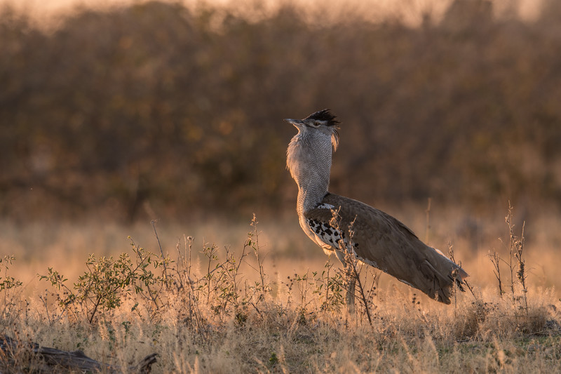 Botswana_June_2017 (4916 of 6179).jpg
