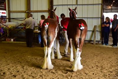 Clyde pair of foals