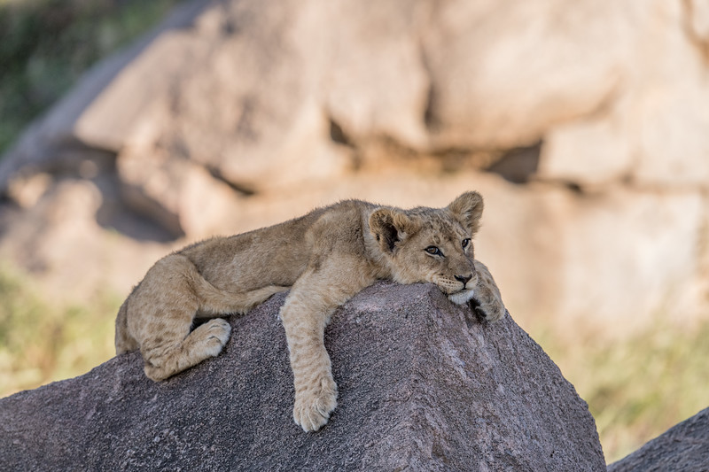 Tanzania_Feb_2018-530.jpg