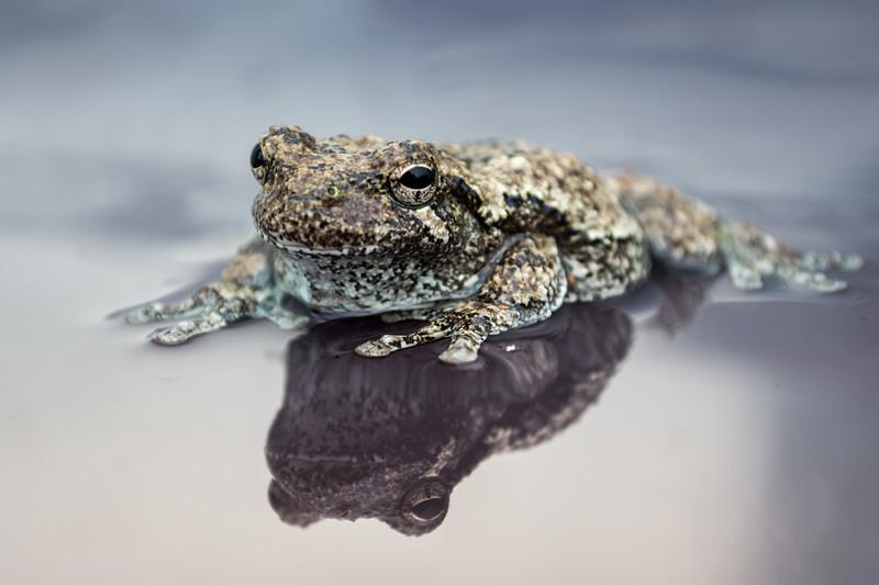 tree frog (3 of 3).jpg