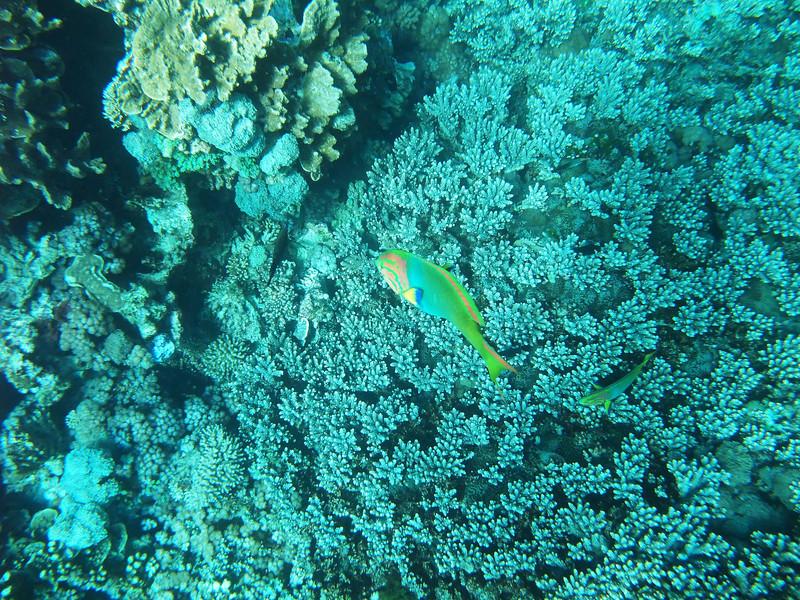 Lord Howe20080511 091244.jpg