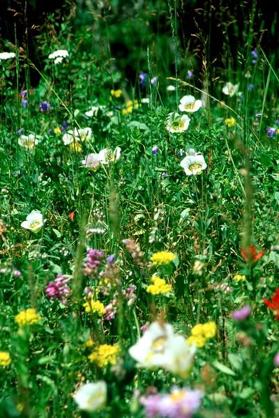 amh FLOWERS (1227).jpg