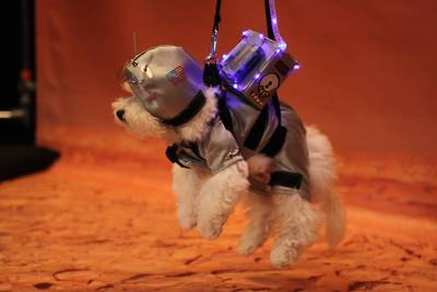 ". ""Rover landing on Mars.\"" From \""The Year in Pup Culture\"""