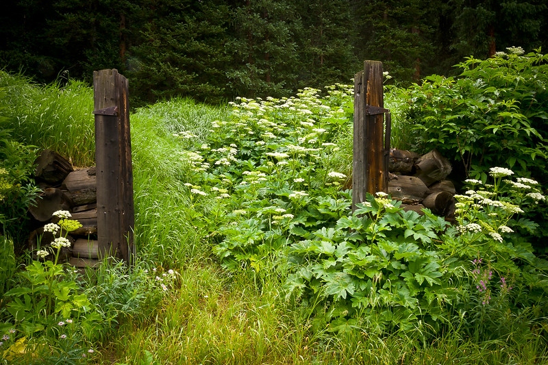 Shrine Pass