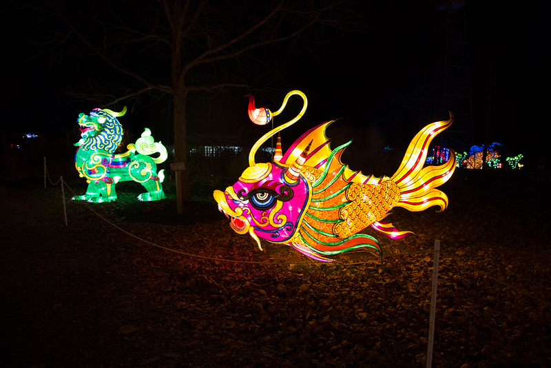 dragon lights 2018-7954.jpg