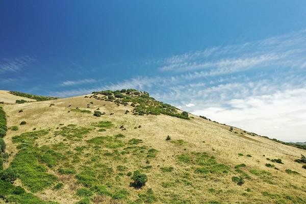 Tenute Asinara - Sorso - Vigne - Primavera - 10.06.2020