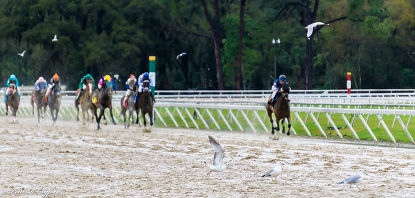 Tampa Bay Downs (1)