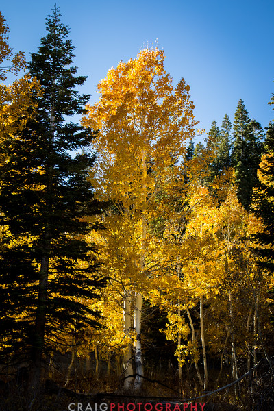 Hope Valley Colors of Fall #7
