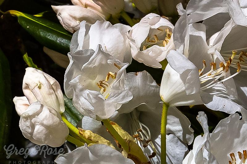 Emerging blooms