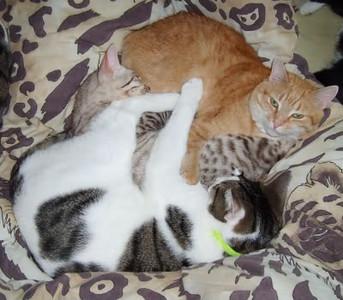 cuddles mogs.jpg