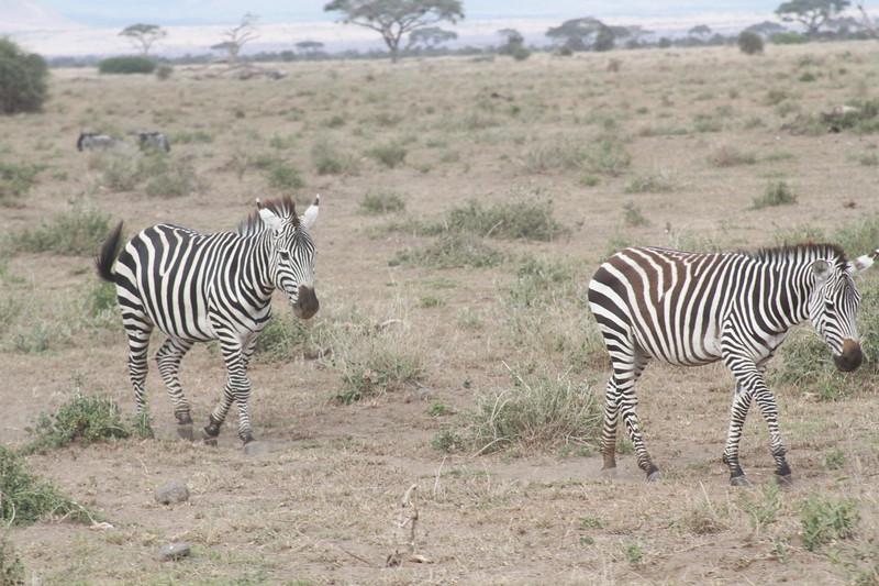 Kenya 2019 #2 704.JPG