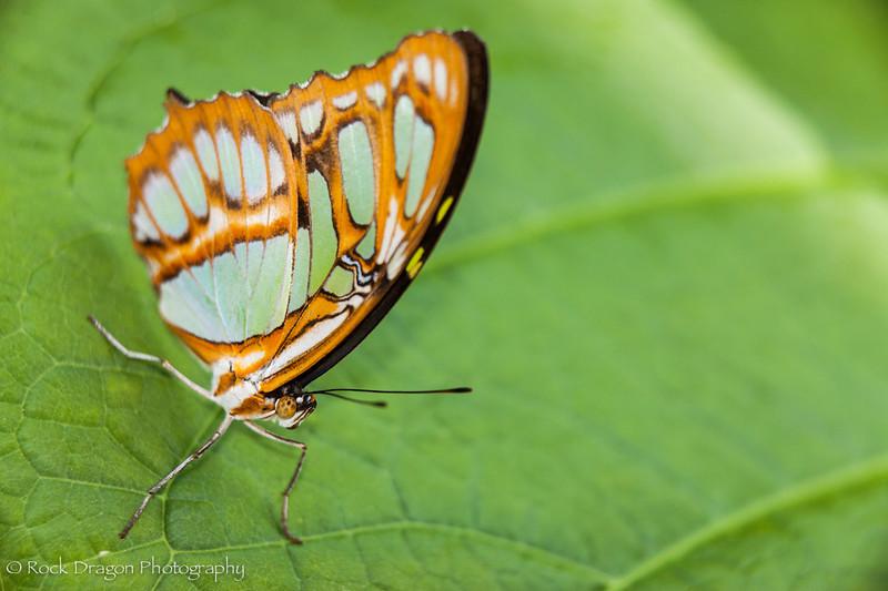 zoo_july_2012-47.jpg
