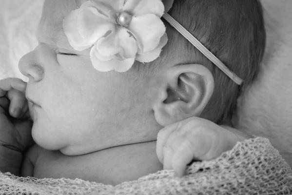 Halley's Newborn Portraits