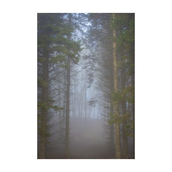 21_365_FoggyTrees_10x10in.jpg