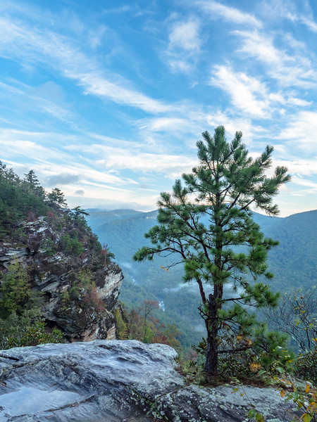 90 Oct 15 Pinetree on Cliff near Linville Gorge -1.jpg