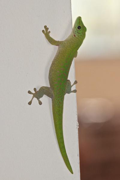 Madagascar 2010