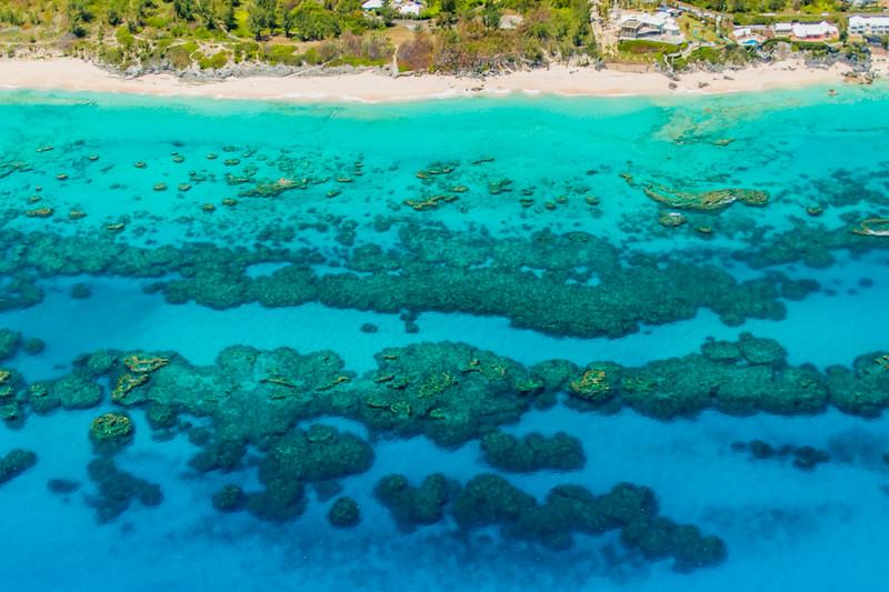 south shore reefs