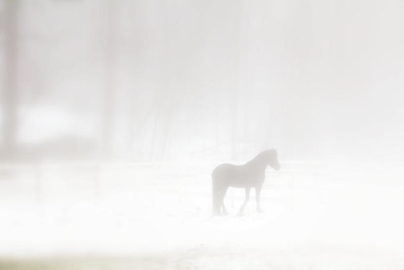 mistyhorse.jpg